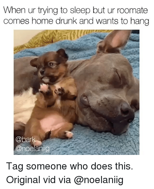 Drunk, Memes, and Home: When ur trying to sleep but ur roomate  comes home drunk and wants to hang  @b  @noelanig Tag someone who does this. Original vid via @noelaniig
