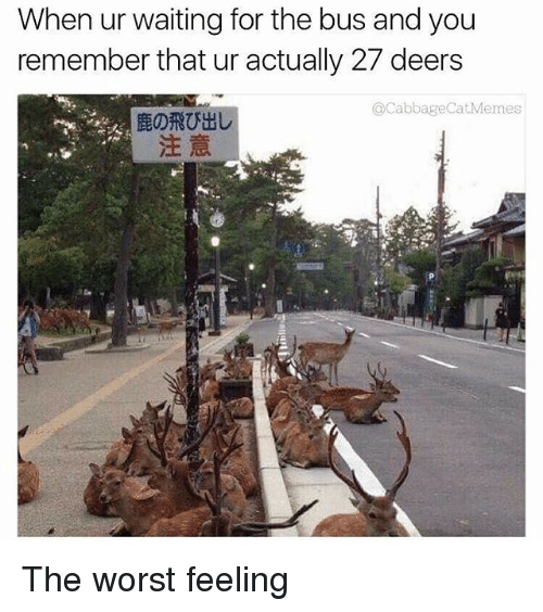 The Worst, Dank Memes, and Waiting...: When ur waiting for the bus and you  remember that ur actually 27 deers  @CabbageCatMemes  鹿の飛び出し  注意 The worst feeling