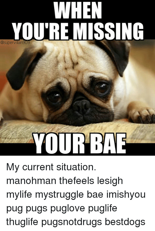 Bae, Pugs, and Dank Memes: WHEN  WHEN  YOU'RE MISSING  @supervillain 909  YOUR BAE My current situation. manohman thefeels lesigh mylife mystruggle bae imishyou pug pugs puglove puglife thuglife pugsnotdrugs bestdogs