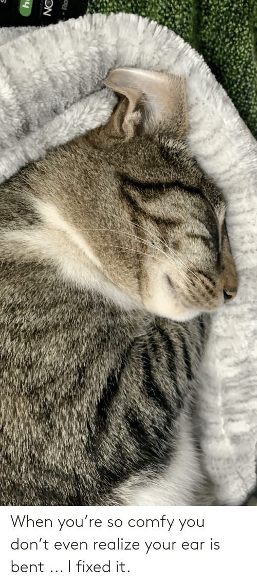 bent: When you're so comfy you don't even realize your ear is bent ... I fixed it.