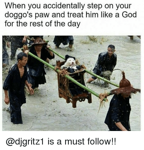 God, Memes, and 🤖: When you accidentally step on your  doggo's paw and treat him like a God  for the rest of the day @djgritz1 is a must follow!!