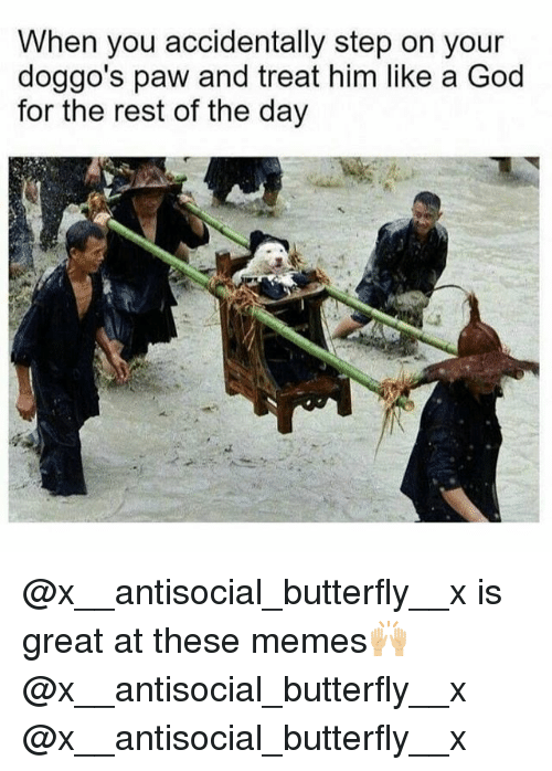 God, Memes, and Butterfly: When you accidentally step on your  doggo's paw and treat him like a God  for the rest of the day @x__antisocial_butterfly__x is great at these memes🙌🏼 @x__antisocial_butterfly__x @x__antisocial_butterfly__x