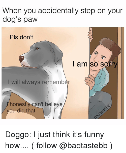 Memes, 🤖, and Pls: When you accidentally step on your  dog's paw  Pls don't  I am so sorry  will always remember  honest  can't believe  you did that Doggo: I just think it's funny how.... ( follow @badtastebb )