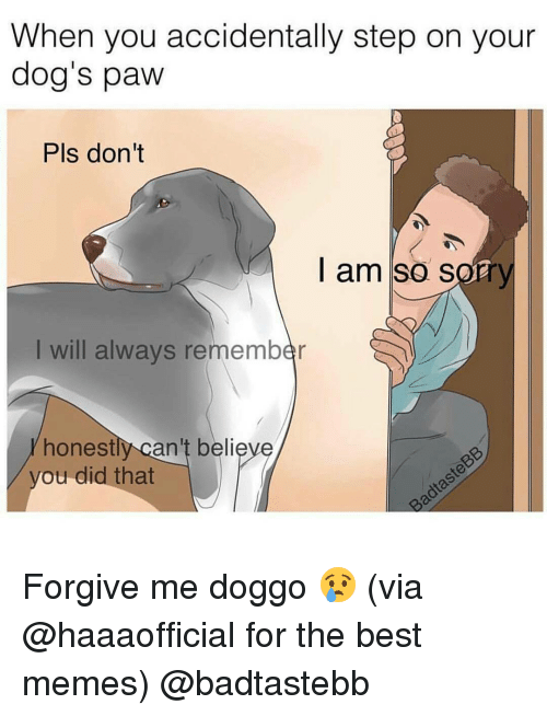 Funny, Doggo, and Best Memes: When you accidentally step on your  dog's paw  Pls don't  I am so sorr  I will always remember  honest  can't believe  you did that Forgive me doggo 😢 (via @haaaofficial for the best memes) @badtastebb