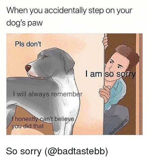 Dogs, Memes, and Sorry: When you accidentally step on your  dog's paw  Pls dont  I am so s  I will always remember  honestly can't believe  ou did that So sorry (@badtastebb)