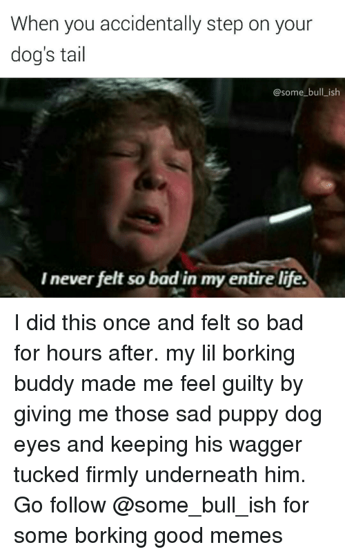 Ironic, Puppies, and Bulls: When you accidentally step on your  dog's tail  @some bull ish  Inever felt so bad in my entire life. I did this once and felt so bad for hours after. my lil borking buddy made me feel guilty by giving me those sad puppy dog eyes and keeping his wagger tucked firmly underneath him. Go follow @some_bull_ish for some borking good memes