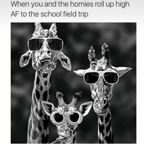 Field Trip, Homie, and Memes: When you and the homies roll up high  AF to the school field trip