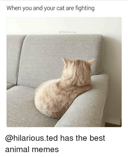 Animals Meme: When you and your cat are fighting  hilarious. ted @hilarious.ted has the best animal memes