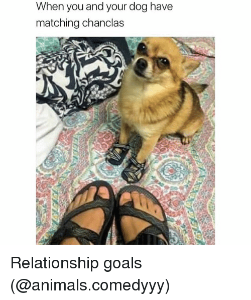 Animals, Funny, and Goals: When you and your dog have  matching chanclas Relationship goals (@animals.comedyyy)