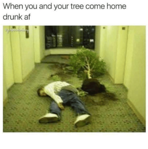 Af, Drunk, and Home: When you and your tree come home  drunk af