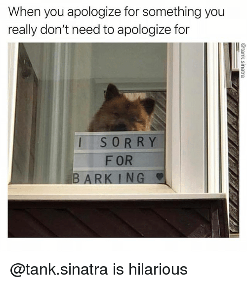 Dank Memes, Hilarious, and Tank: When you apologize for something you  really don't need to apologize for  ISORRY  F OR  BARK ING @tank.sinatra is hilarious