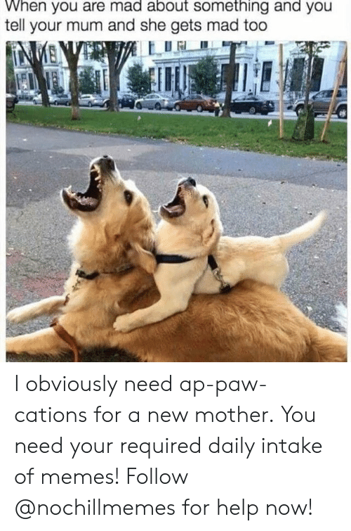 paw: When you are mad about something and you  tell your mum and she gets mad too  NMENVE I obviously need ap-paw-cations for a new mother.  You need your required daily intake of memes! Follow @nochillmemes for help now!