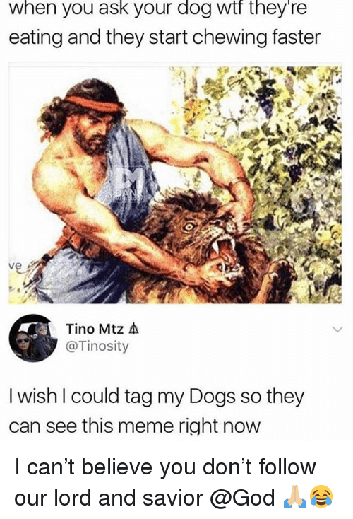 Dogs, God, and Meme: when you ask your dog wif tney re  eating and they start chewing faster  Tino Mtz 소  @Tinosity  I wish l could tag my Dogs so they  can see this meme right now I can't believe you don't follow our lord and savior @God 🙏🏼😂