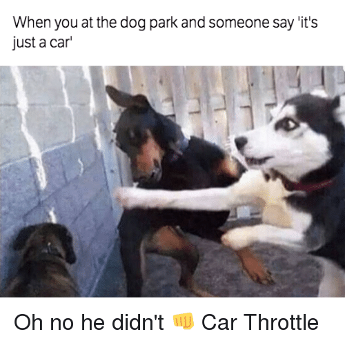 25+ Best Memes About Throttle