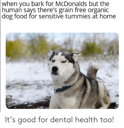 McDonalds: when you bark for McDonalds but the  human says there's grain free organic  dog food for sensitive tummies at home It's good for dental health too!