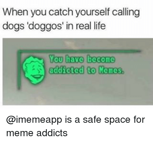 Meme Addict: When you catch yourself calling  dogs doggos' in real life  You have become  addicted to Memes @imemeapp is a safe space for meme addicts
