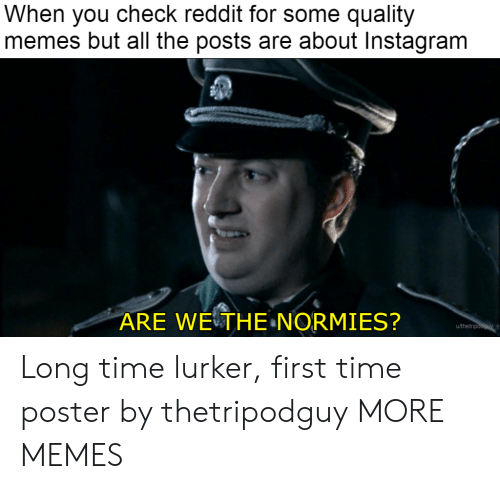 Quality Memes: When you check reddit for some quality  memes but all the posts are about Instagram  ARE WETHE NORMIES?  u/thetri Long time lurker, first time poster by thetripodguy MORE MEMES