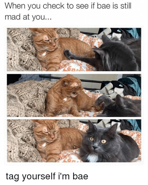 Still Mad At You: When you check to see if bae is still  mad at you. tag yourself i'm bae