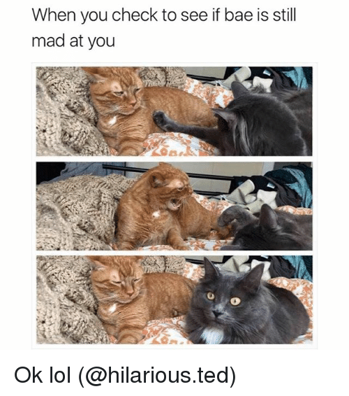 Still Mad At You: When you check to see if bae is still  mad at you Ok lol (@hilarious.ted)