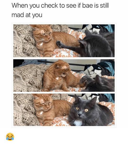 Still Mad At You: When you check to see if bae is still  mad at you 😂