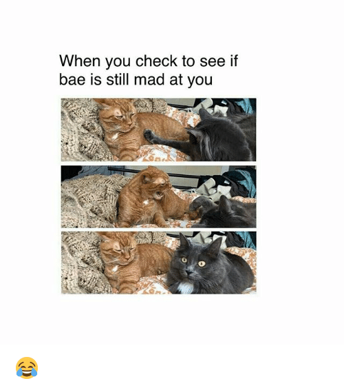 Still Mad At You: When you check to see if  bae is still mad at you  0 😂