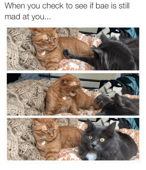 Still Mad At You: When you check to see if bae is still  mad at you...