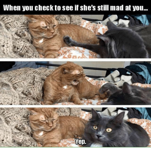 Still Mad At You: When you check to see if she's still mad at you...  Yep.