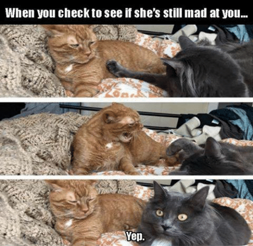 Still Mad At You: When you check to see if she's still mad at you...  Yep