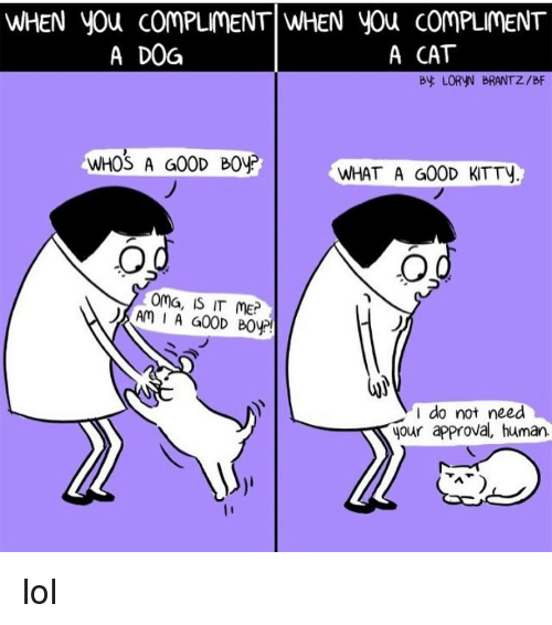 Memes, Approved, and 🤖: WHEN you COMPLIMENT WHEN you ComPLIMENT  A CAT  A DOG  By LORVN BRANTZ/BF  WHOS A GOOD BOVP  WHAT A GOOD KTTy  OMG, IS IT ME?  Am I A GOOD B0yr!  I do not need  A your approval, human lol