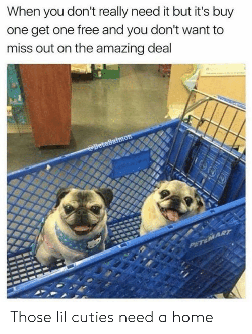cuties: When you don't really need it but it's buy  one get one free and you don't want to  miss out on the amazing deal  BetaSalmon  PET&MART Those lil cuties need a home