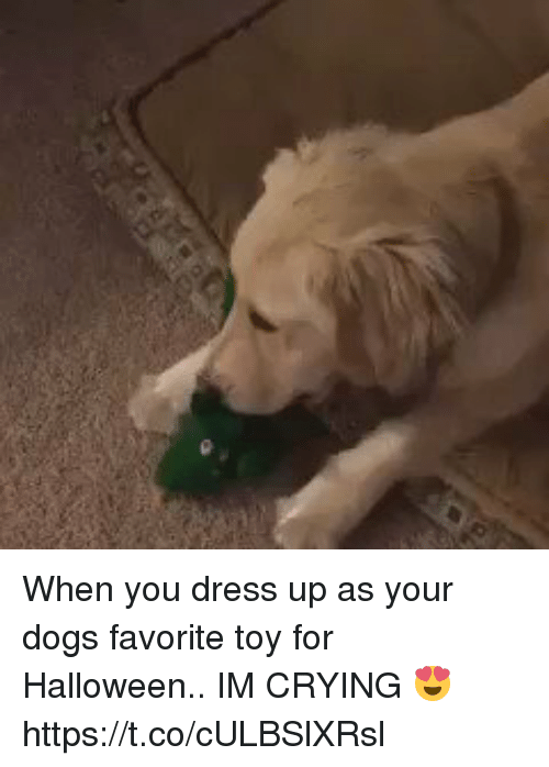 Crying, Dogs, and Halloween: When you dress up as your dogs favorite toy for Halloween.. IM CRYING 😍 https://t.co/cULBSlXRsl
