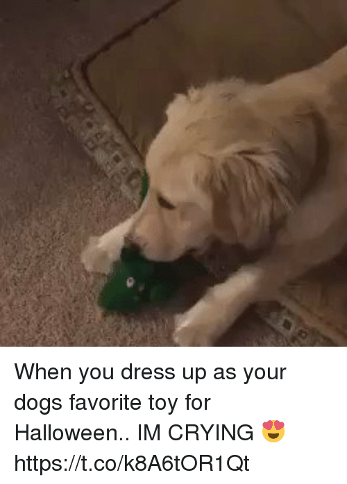 Crying, Dogs, and Funny: When you dress up as your dogs favorite toy for Halloween.. IM CRYING 😍 https://t.co/k8A6tOR1Qt