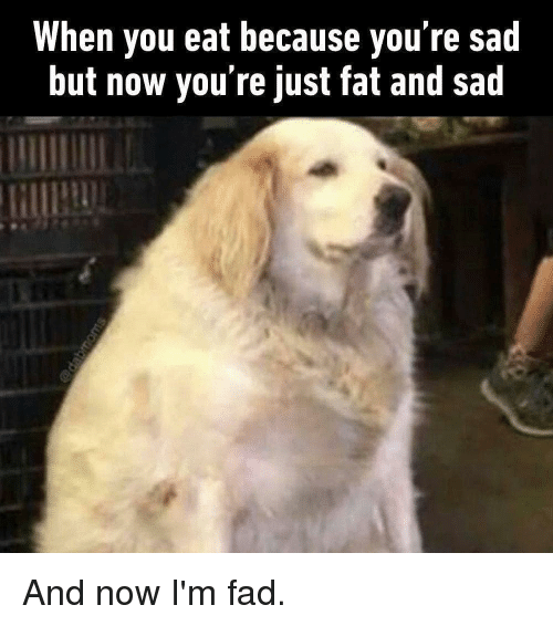 Memes, Fat, and Sad: When you eat because you re sad  but now you're just fat and sad And now I'm fad.