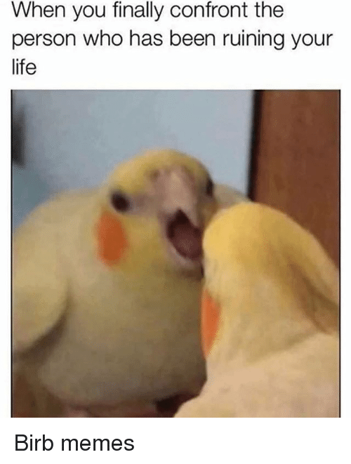Life, Memes, and Dank Memes: When you finally confront the  person who has been ruining your  life Birb memes