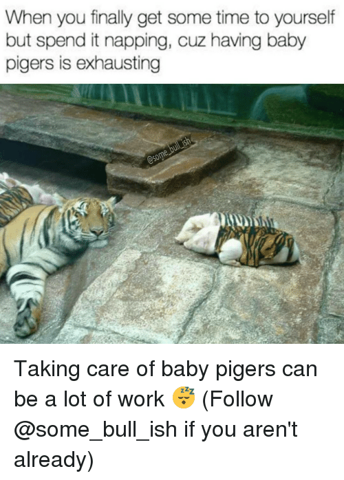 Memes, Bulls, and 🤖: When you finally get some time to yourself  but spend it napping, cuz having baby  pigers is exhausting Taking care of baby pigers can be a lot of work 😴 (Follow @some_bull_ish if you aren't already)