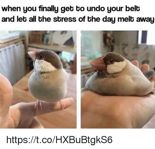 Memes, All The, and 🤖: when you finally get to undo your belb  and let all the stress of the day melt away https://t.co/HXBuBtgkS6