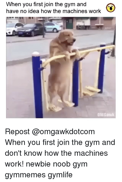 Noobing: When you first join the gym and  have no idea how the machines work  OMGawk Repost @omgawkdotcom ・・・ When you first join the gym and don't know how the machines work! newbie noob gym gymmemes gymlife