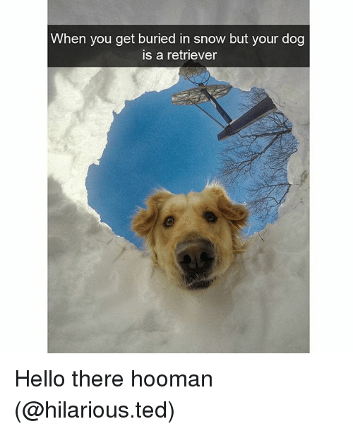 Hoomans: When you get buried in snow but your dog  is a retriever Hello there hooman (@hilarious.ted)