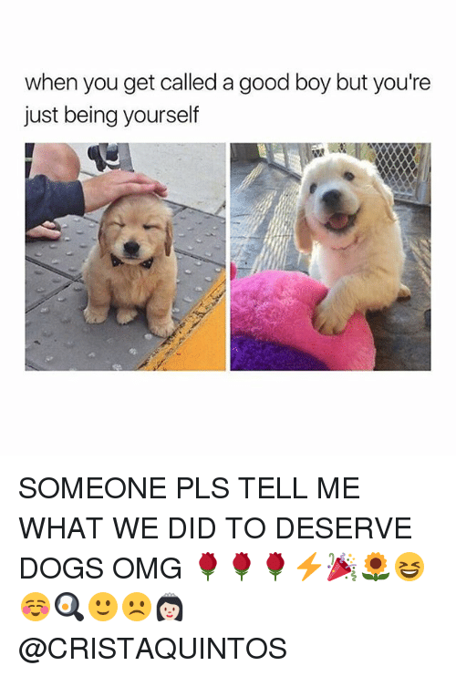 Dogs, Omg, and Good: when you get called a good boy but you're  just being yourself SOMEONE PLS TELL ME WHAT WE DID TO DESERVE DOGS OMG 🌹🌹🌹⚡️🎉🌻😆☺️🍳🙂☹️👸🏻 @CRISTAQUINTOS