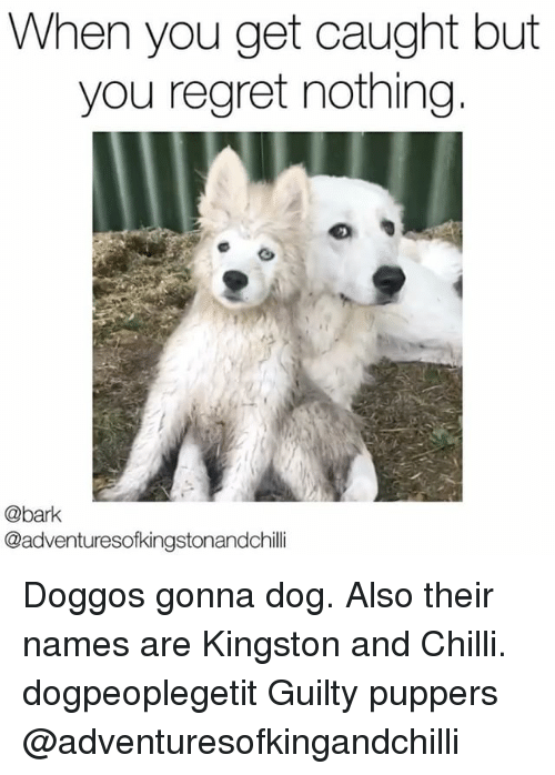 When: When you get caught but  you regret nothing  @bark  @adventuresofkingstonandchilli Doggos gonna dog. Also their names are Kingston and Chilli. dogpeoplegetit Guilty puppers @adventuresofkingandchilli