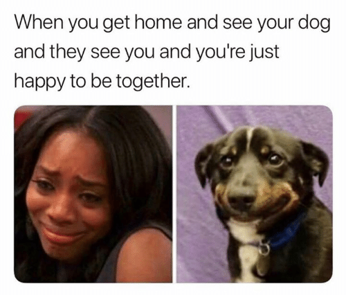When You Get Home: When you get home and see your dog  and they see you and you're just  happy to be together.
