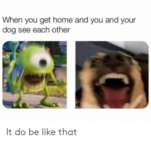 When You Get Home: When you get home and you and your  dog see each other It do be like that