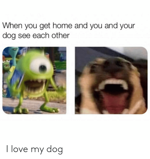 When You Get Home: When you get home and you and your  dog see each other I love my dog
