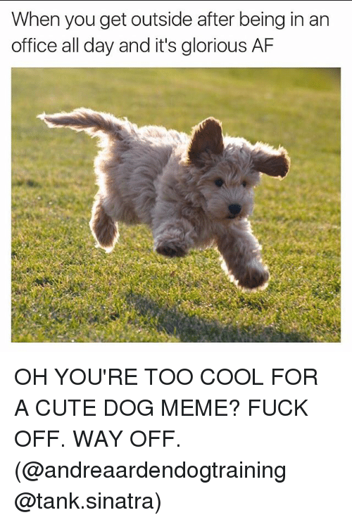 Meme Fuck: When you get outside after being in an  office all day and it's glorious AF OH YOU'RE TOO COOL FOR A CUTE DOG MEME? FUCK OFF. WAY OFF. (@andreaardendogtraining @tank.sinatra)