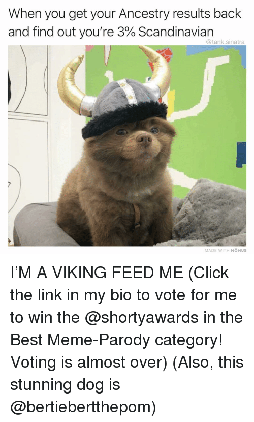 Parody: When you get your Ancestry results back  and find out you're 3% Scandinavian  @tank.sinatra  MADE WITH MOMUS I'M A VIKING FEED ME (Click the link in my bio to vote for me to win the @shortyawards in the Best Meme-Parody category! Voting is almost over) (Also, this stunning dog is @bertiebertthepom)