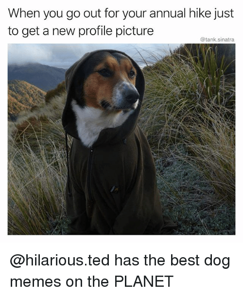 Funny, Memes, and Ted: When you go out for your annual hike just  to get a new profile picture  @tank.sinatra @hilarious.ted has the best dog memes on the PLANET