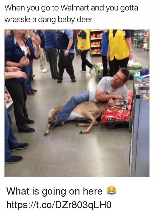Deer, Memes, and Walmart: When you go to Walmart and you gotta  wrassle a dang baby deer What is going on here 😂 https://t.co/DZr803qLH0