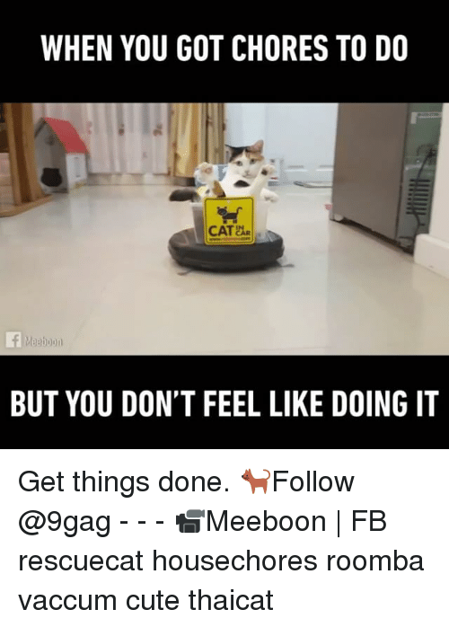 roombas: WHEN YOU GOT CHORES TO DO  CAT AR  BUT YOU DON'T FEEL LIKE DOING IT Get things done. 🐈Follow @9gag - - - 📹Meeboon | FB rescuecat housechores roomba vaccum cute thaicat