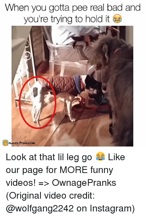 Gotta Pee: When you gotta pee real bad and  you're trying to hold it  own age Pranks.com Look at that lil leg go 😂  Like our page for MORE funny videos! => OwnagePranks (Original video credit: @wolfgang2242 on Instagram)