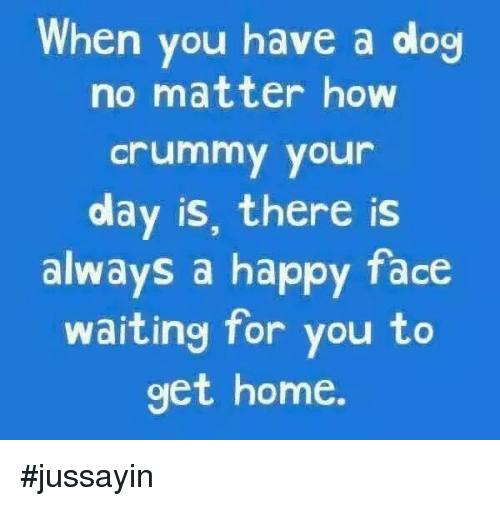 happy face: When you have a dog  no matter how  crummy your  day is, there is  always a happy face  waiting for you to  get home. #jussayin